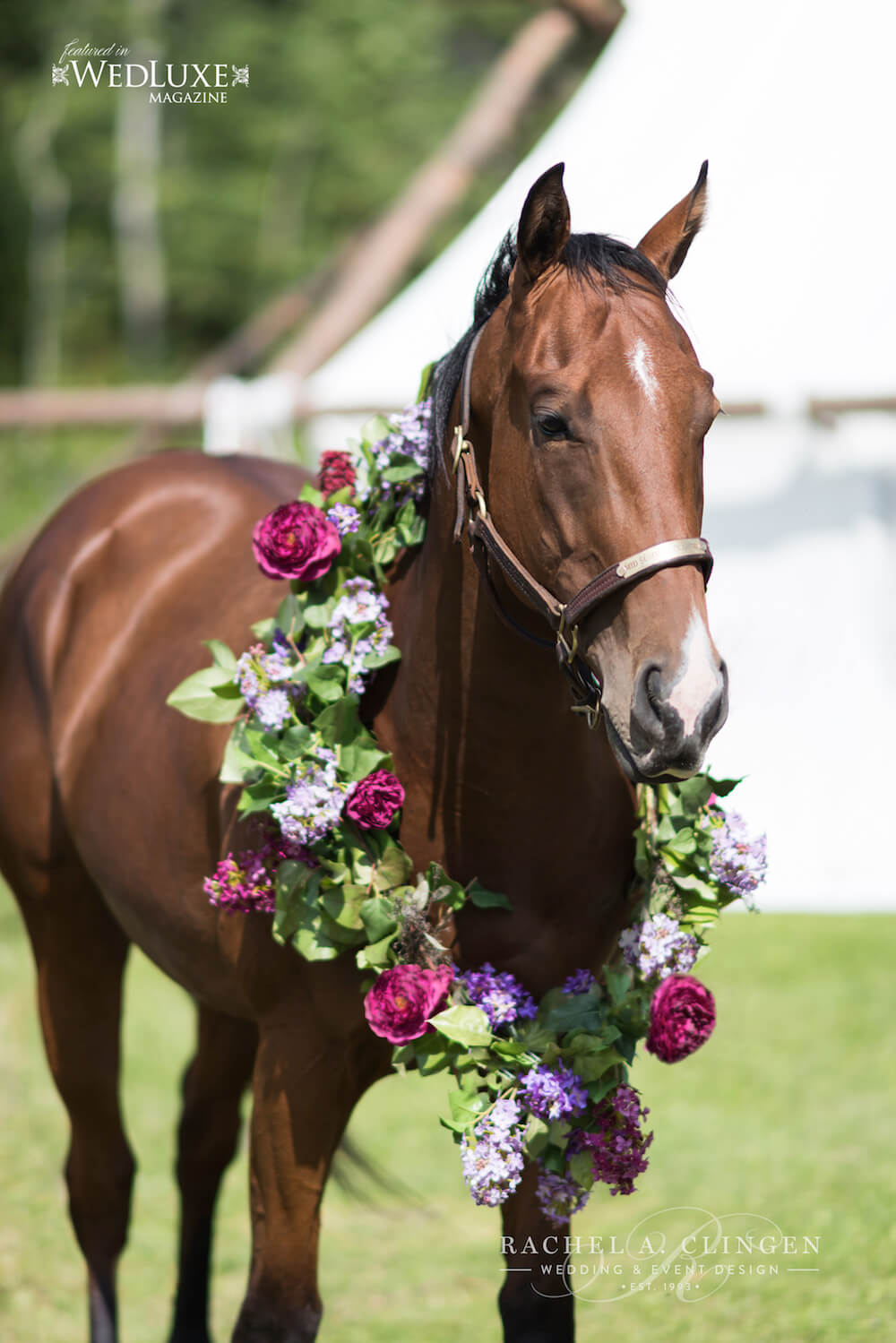 Equine-Wedding-Horse